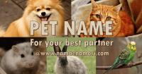 【2021年版】ペットの名前を付けたい時におすすめのサイト5選